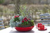 Mini-Garten mit Tausendschön in roter Schale