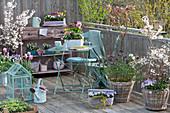 Frühlings-Balkon mit Frühlingsblühern und Zierkirschen