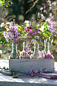 Blütenzweige und Lenzrose in kleinen Flaschen