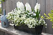 Weiß bepflanzter Frühlingskasten