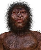 Homo naledi male, illustration
