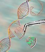 CRISPR gene editing, conceptual illustration