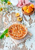 Aprikosen-Marzipan-Kuchen