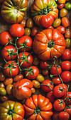 Verschiedene Tomatensorten mit Wassertropfen