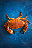 A crab on a blue background