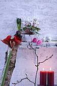 Winterliche Zimmerdeko mit Blumen, Birkenstamm und Kerzen
