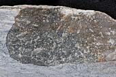Kalksediment Peitlerk 115-2 Bruch 4x - Kalksediment, frische Bruchfläche, 4:1
