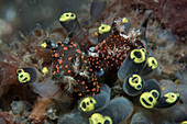 Fluorescent sea slugs and tunicates