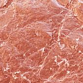 Haut Baby 150x - Haut eines Babys 150:1