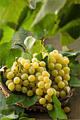 Grapes from Mazzarone, Sicily, Italy