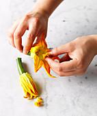 Den Blütenstempel der Zucchiniblüten entfernen