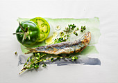 Food art: sardines with green tomatoes, thyme and olive oil on a page of watercolour
