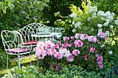 Sitzplatz neben Rhododendron und Flieder