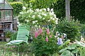 Grüne Liege neben Flieder 'Agnes Smith' und Lupine 'Gallery Rosa'