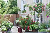 Terrasse mit Rosen und Stauden