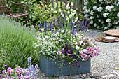Blau - weiß bepflanzter Kasten mit Balkonblumen