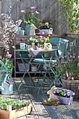 Oster-Balkon mit Frühlingsblühern und Zierkirsche