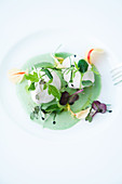 Burgundy white cheese on cress