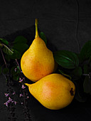 Two pears with basil on a black surface