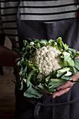 Mann mit Leinenschürze hält frischen Blumenkohl