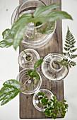 Wurzelnde Blätter und Pflanzen in Glasvasen