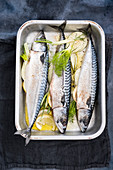Trout with dill and lemons in a oven dish