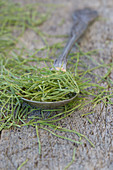 Dried horsetail witha silver spoon