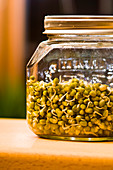 A jar of mung bean shoots