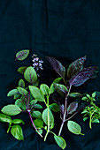 Various types of basil on a black surface