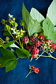 A sprig of raspberries with leaves, flowers and berries