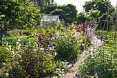 Kleingarten mit Gemüsebeeten und Stauden- und Blumenrabatten im Hochsommer