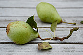 Pears with stems and leaves