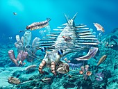 Cambrian sea, illustration
