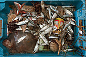 Fishing bycatch and drinks can