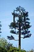 Phone mast tree