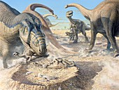 Aucasaurus dinosaur, illustration