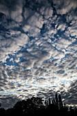 Altocumulus stratiformis clouds