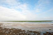 Wadden Sea coastal mud flats
