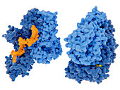 HIV-1 reverse transcriptase inhibition, illustration