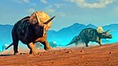 Herd of triceratops, illustration