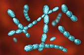 Haemophilus ducreyi bacteria, illustration