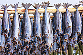 Stockfish on wood racks (Lofoten Islands, Norway)