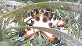 Starfish in seagrass