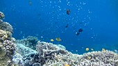 Corals and reef fish