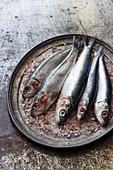 Fresh sardines on a metal tray