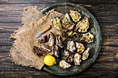 Frische Austern mit Austernmesser und Zitrone auf Teller (Aufsicht)