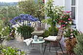 Terrasse mit Schmucklilie, Maronenbaum, Olive und Buntblättrige Bitterorange