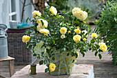 Gelbe Beetrose 'Solero' als Geschenk in Geschenkpapier