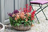 Korb mit Feuersalbei in lachsfarben, rot und violett