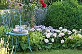 Beet mit Rose 'Garden of Roses', Phlox, Frauenmantel und Fingerhut